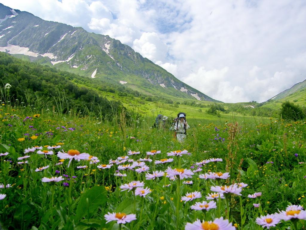 Альпийские Луга 3-1