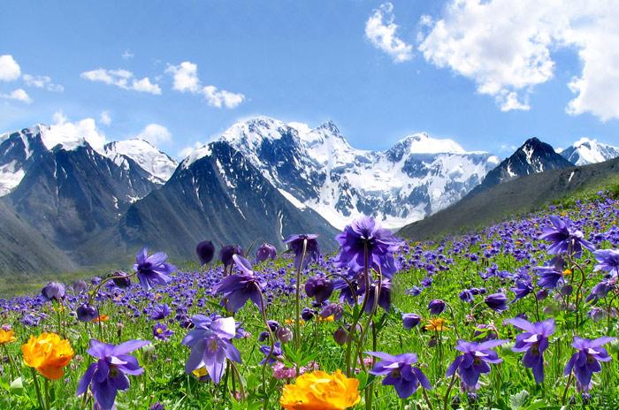 Альпийские Луга 4-2