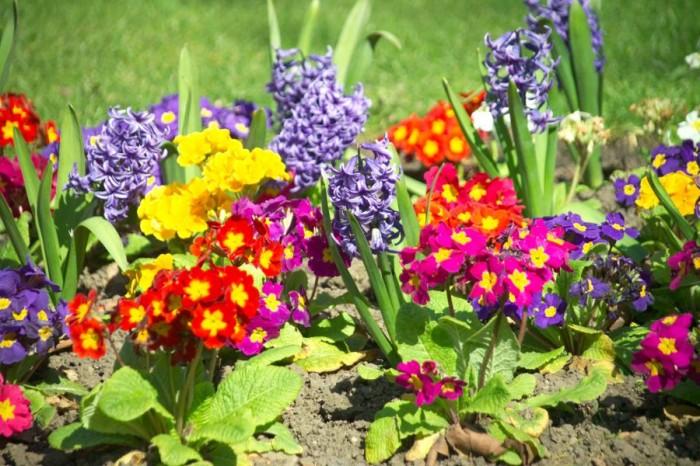 Мир цветов, растений, деревьев JoyFlowers
