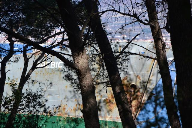 Motiv fotografiranja - Posljedice nevremena DSC_0100