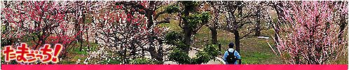 Tokyo Parkes