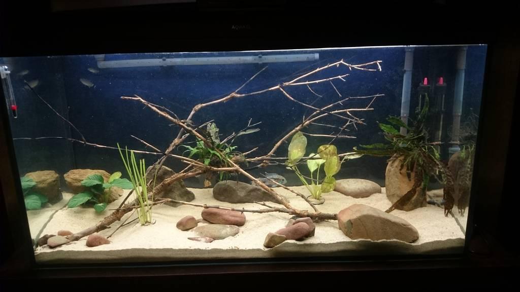 Mi acuario de 200 litros  - Página 3 DSC_0021_zpslovqymle
