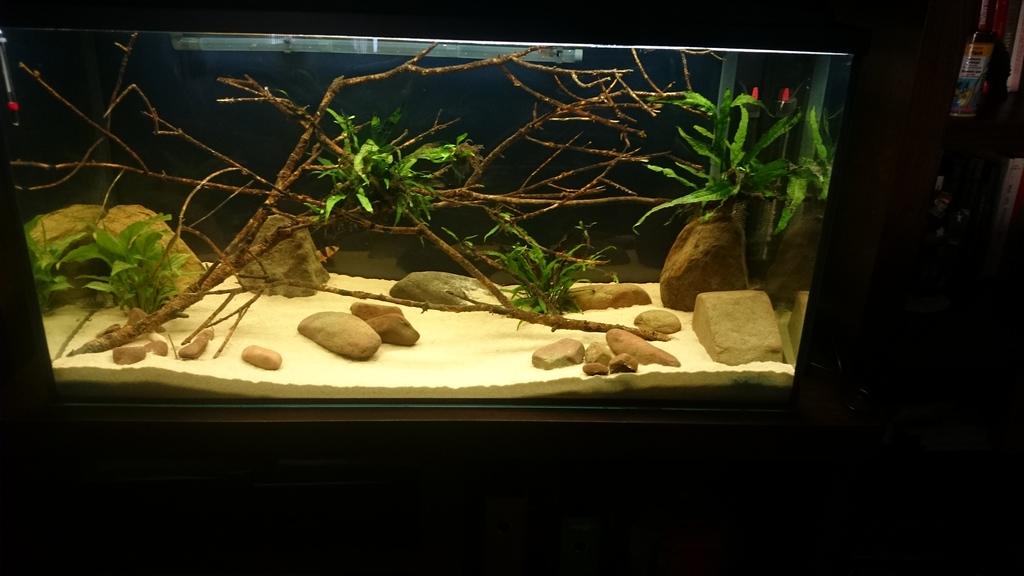 Mi acuario de 200 litros  DSC_0312_zpsvqsundz4