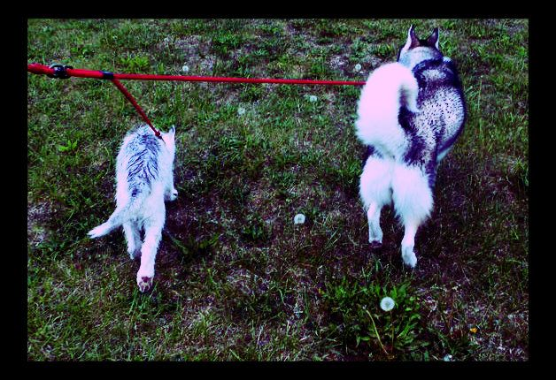 Delilah & Cato - Scrapbook Update 7/19/13 summer days for Delilah Photobucket-5011-1336167823500-1