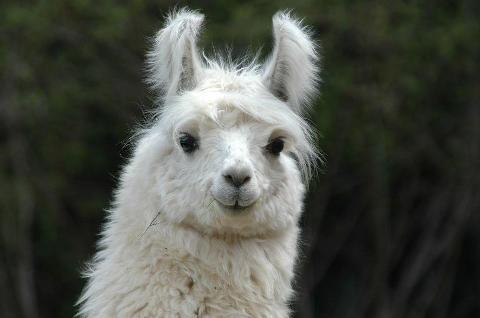 Chloe, here. Llama2lol_zpsa81df5b5