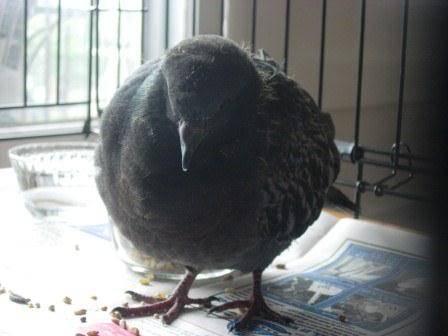 my feathered friend Brian Brianfirstweek