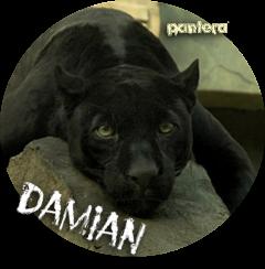 Fichas de Yami Damianavatar2