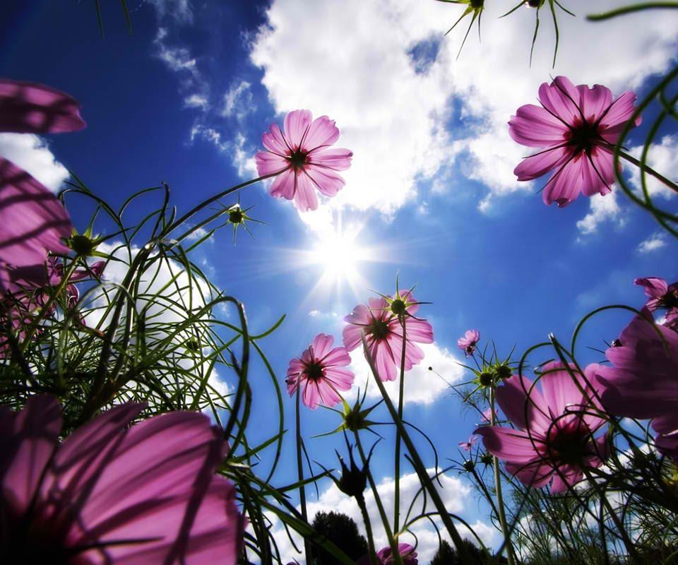 அழகிய மலர் காட்சிகள் (01) Flowers_6
