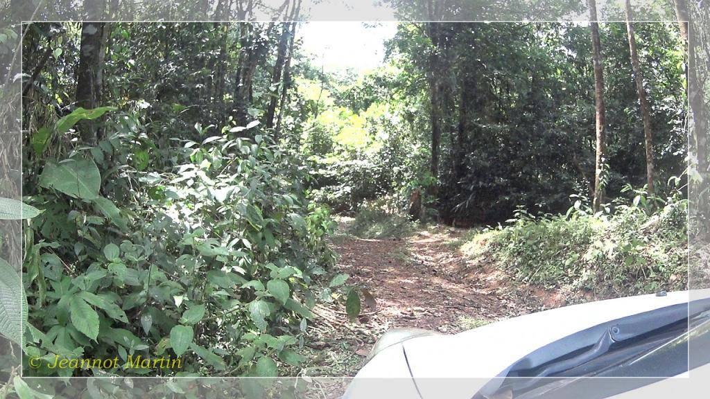 Guyane 2014 Criqueblanche1