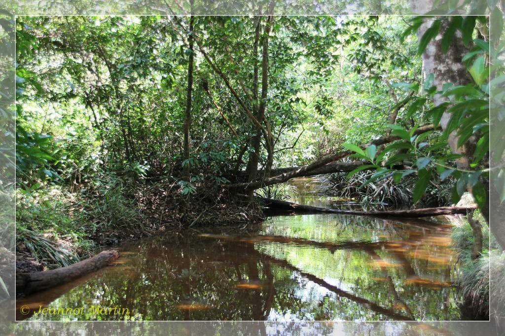Guyane 2014 Criqueblanche3-6449