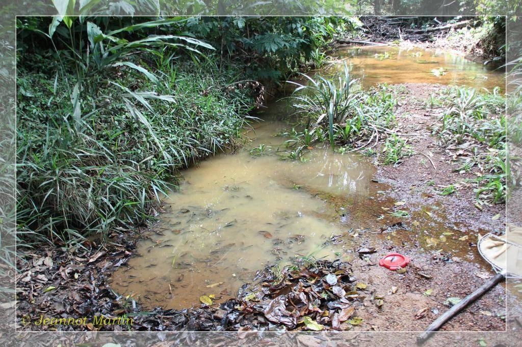 Guyane 2014 Criqueblanche6-6451