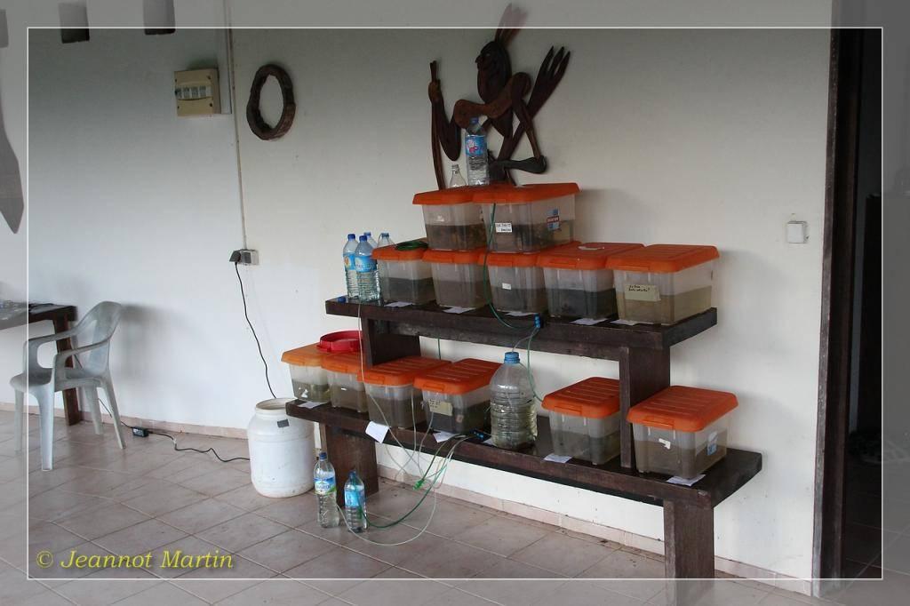 Guyane 2014 Installation1-6589
