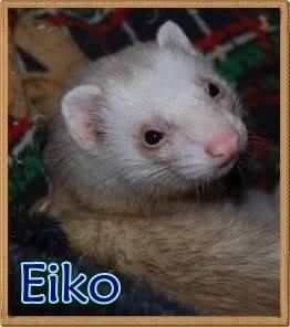 Colores de los Hurones. Eiko2-1-1
