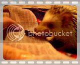 des videos... Yeahhhhhh Th_gouino-criquet