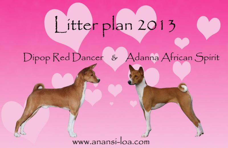 BASENJI leglo 2013/14 Litterplan2013