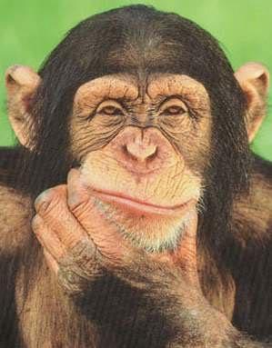 Cartoon da Semana - 09/12/11 Macaco