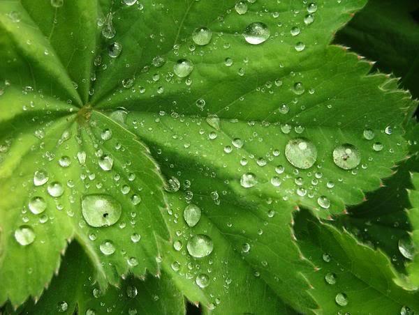Kapljice vode - Page 4 Morning_dew_-_Close_upmed