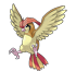 Equipo Pokemón Pidgeotto1_zps0917bb8a
