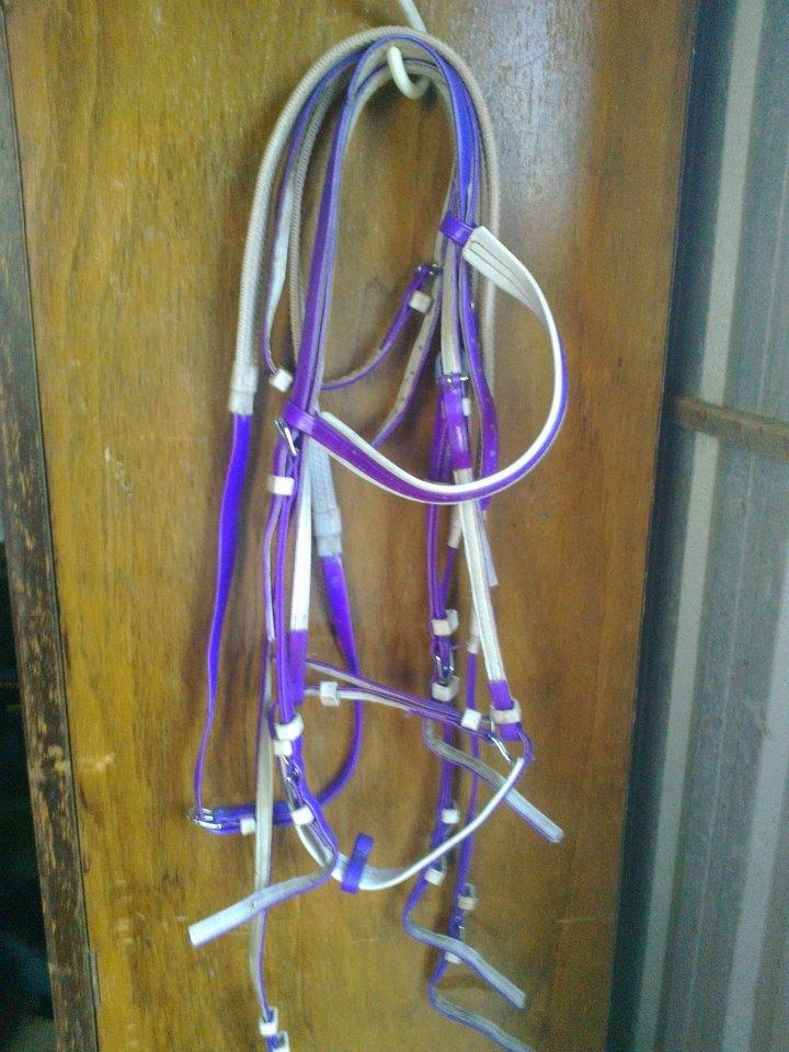 PVC BRIDLES & RAMS PAD 523107_375195769217094_1054575545_n
