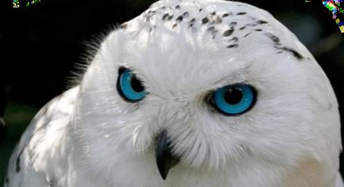Heydi!!  Jolie's Owl  Heydi