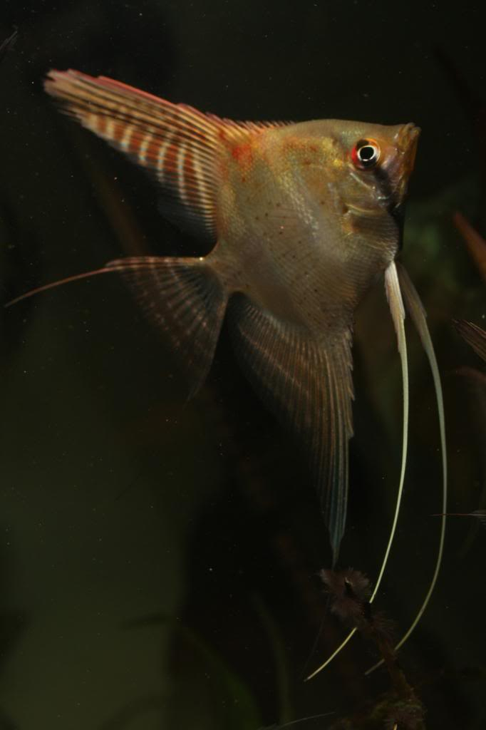 Robs fish room tales. - Page 4 IMG_0370_zps8224a992