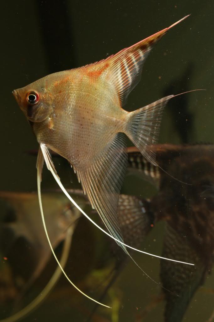 Robs fish room tales. - Page 4 IMG_0381_zpsaaa8b109