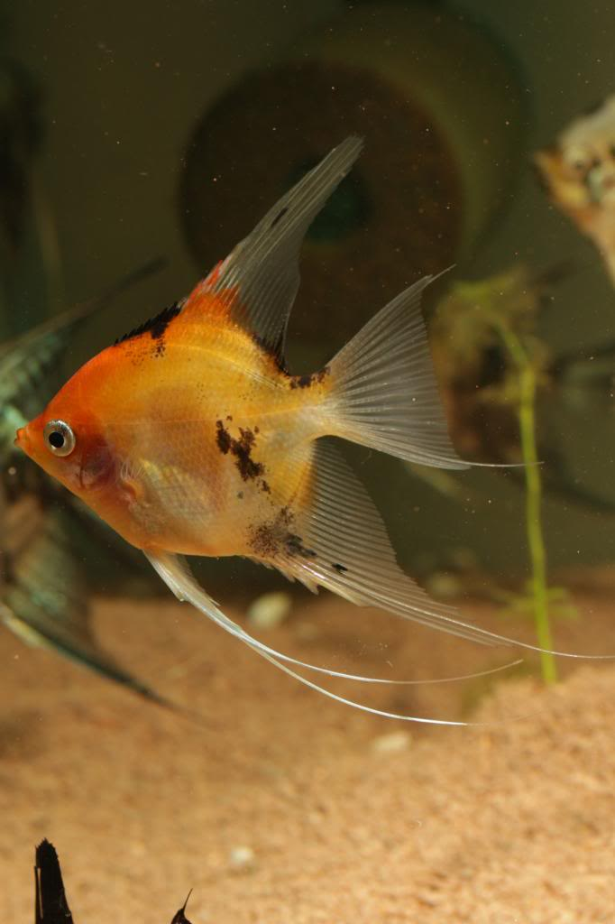 Robs fish room tales. - Page 4 IMG_0402_zps6e7b656a