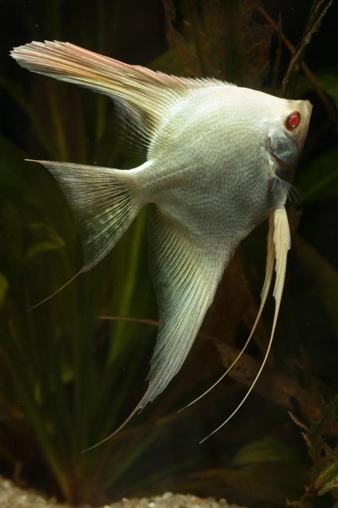 Robs fish room tales. - Page 4 IMG_0570_zpsb88ee6b5