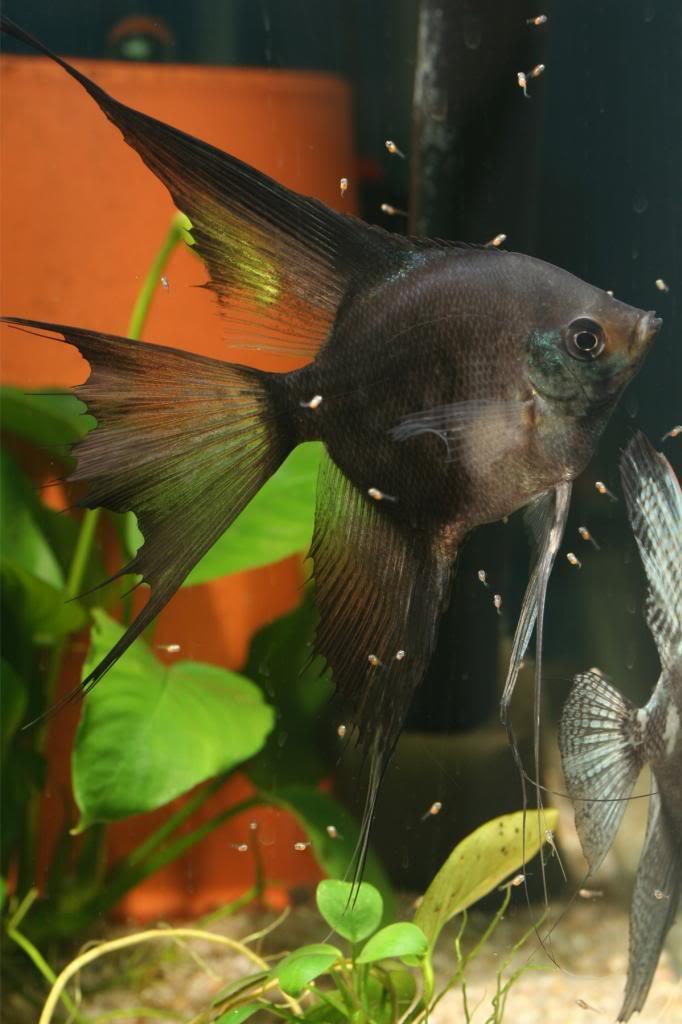 Robs fish room tales. IMG_1467-1_zps1d766e2b
