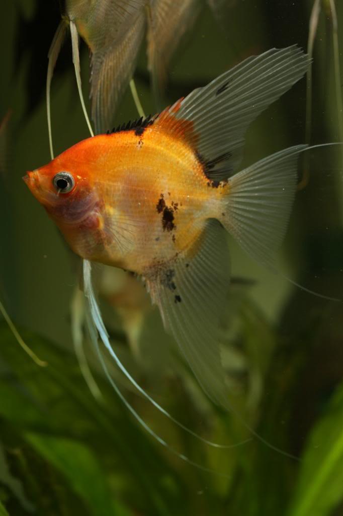 Three Photos, One fish IMG_1569_zpse570447c