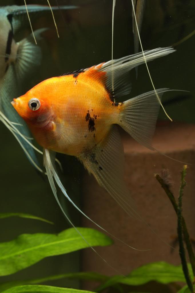 Three Photos, One fish IMG_1713_zps4e52fea4