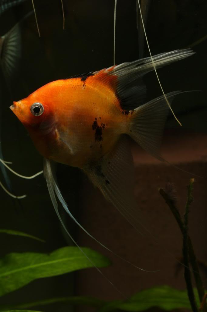 Three Photos, One fish IMG_1715_zpsc5170f58