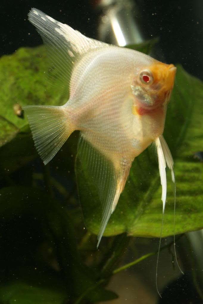 Baby Albinos IMG_2592_zpseac93118