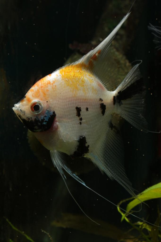 Robs fish room tales. - Page 4 IMG_3778sm_zps2aa6cf73