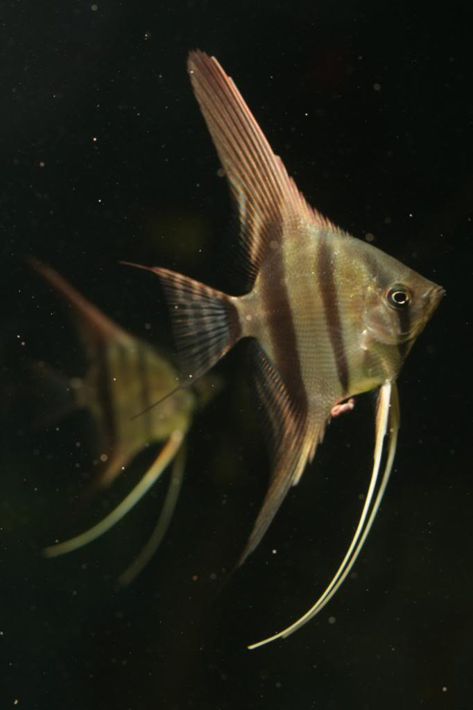 Robs fish room tales. - Page 4 IMG_8200_zps6b59dca8
