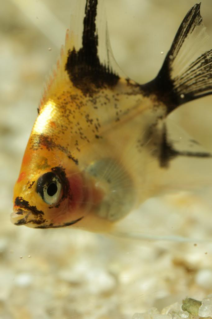 More of my fish IMG_8485_zps3a47e55f