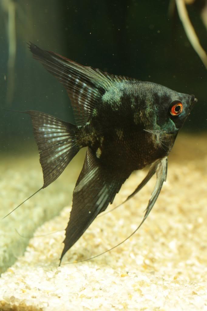 More of my fish IMG_8514_zps61371fe6
