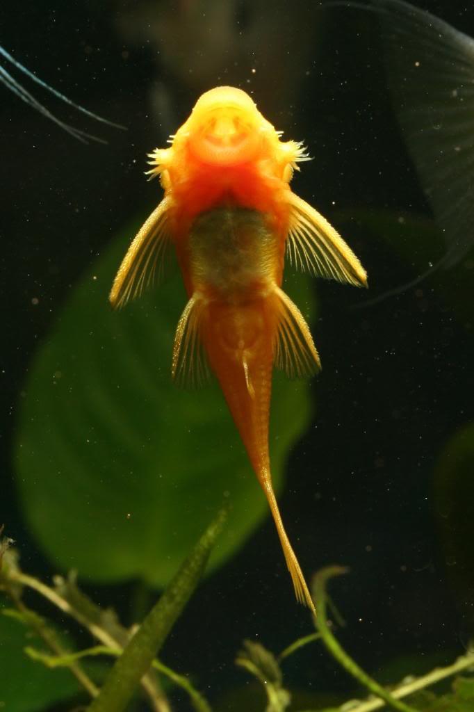 Robs fish room tales. IMG_8659_zps81a3cb05