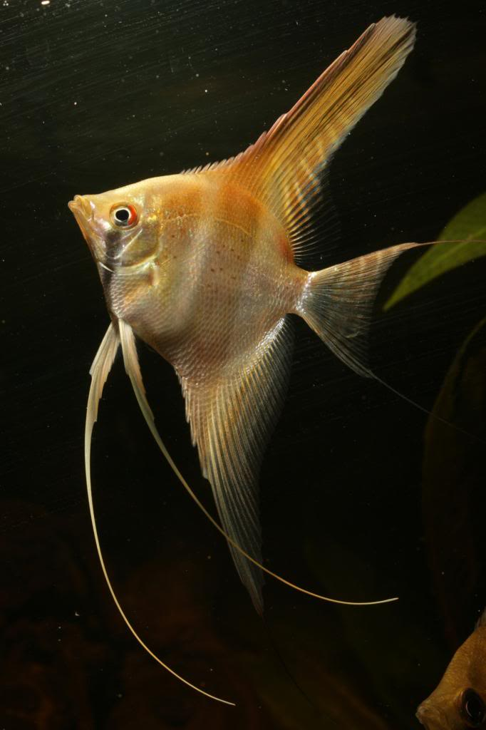 Robs fish room tales. - Page 4 IMG_9883_zps416c6db4