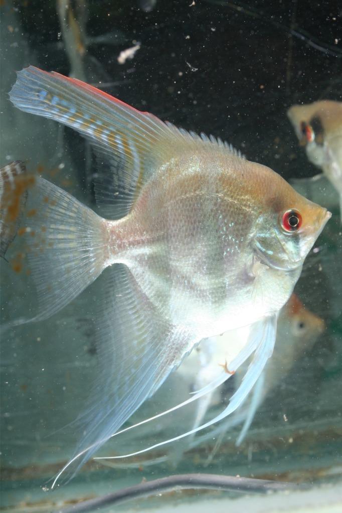 Lisa's fish IMG_2502