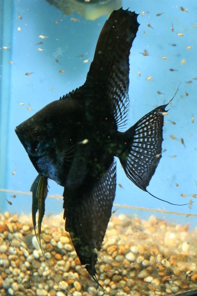 Lisa's fish IMG_2507