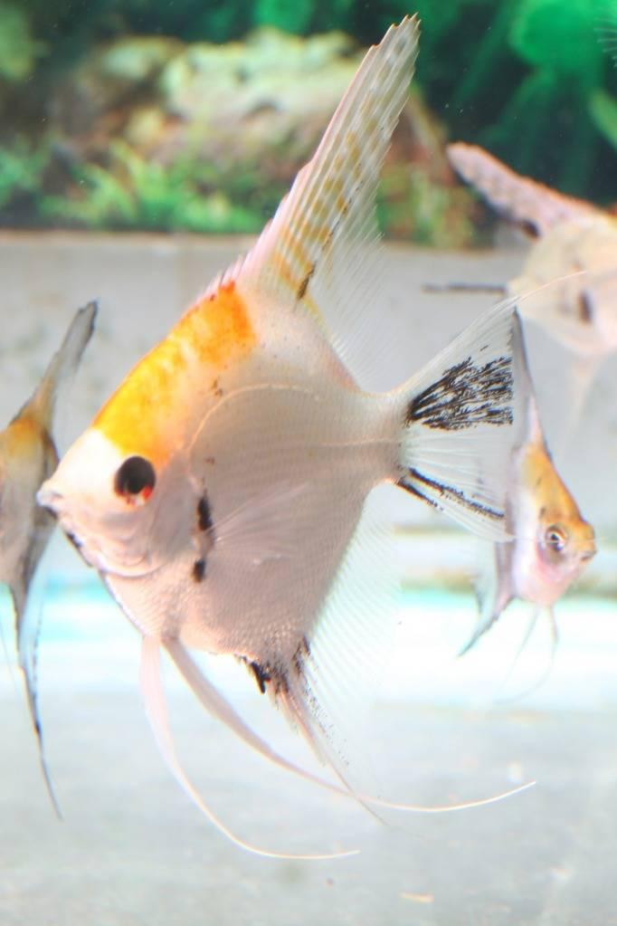 Lisa's fish IMG_2515