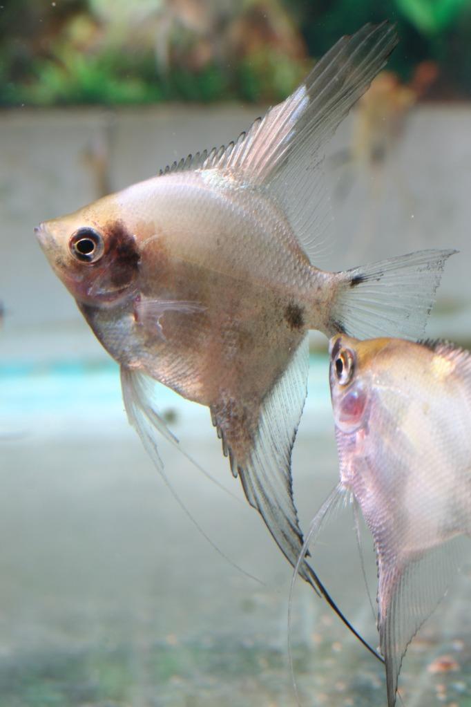 Lisa's fish IMG_2519