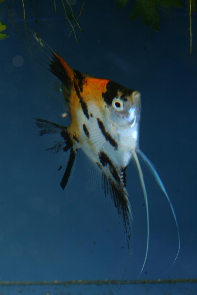 Lisa's fish IMG_2530