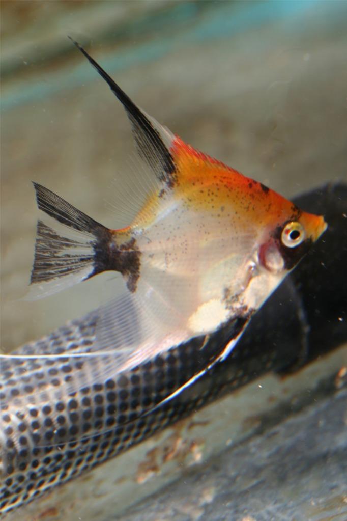 Lisa's fish IMG_2537