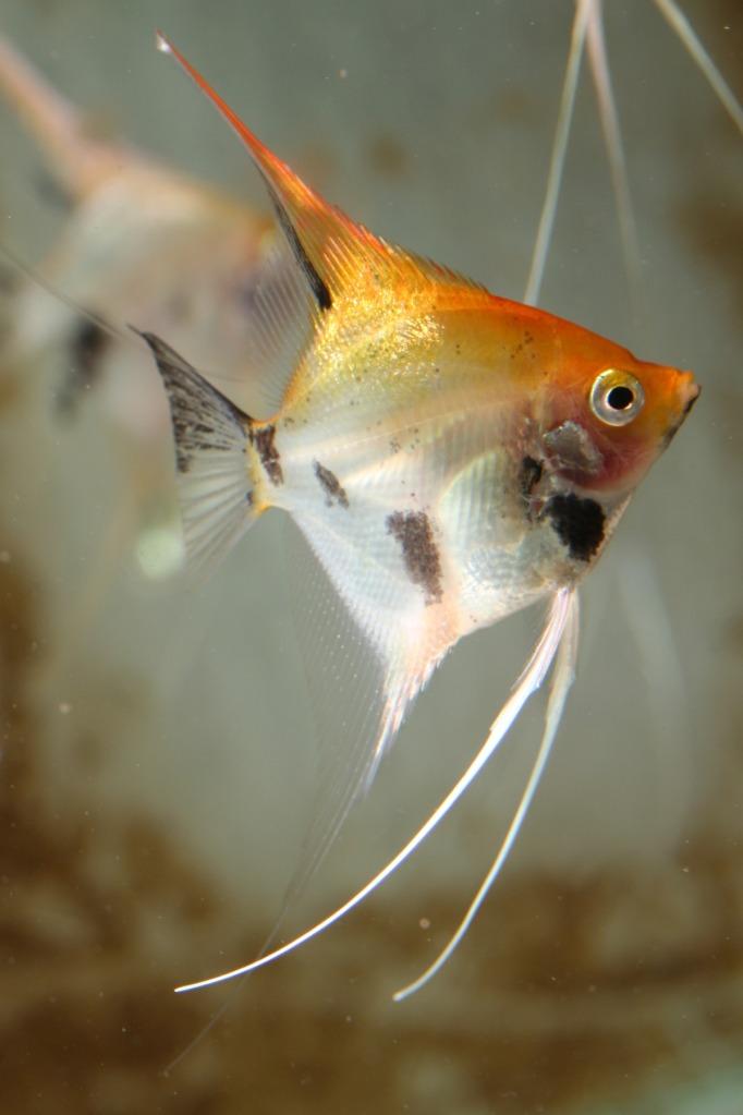 Lisa's fish IMG_2542