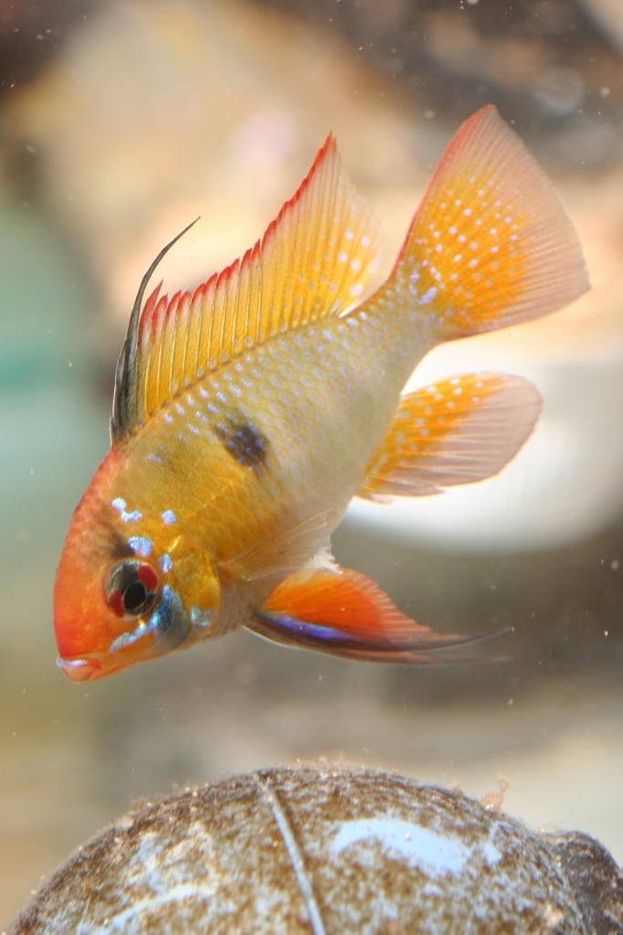 Lisa's fish IMG_2543