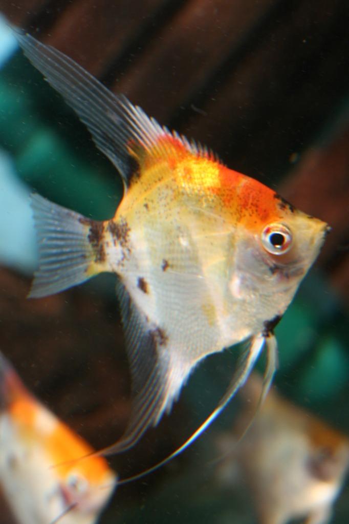 Lisa's fish IMG_2554