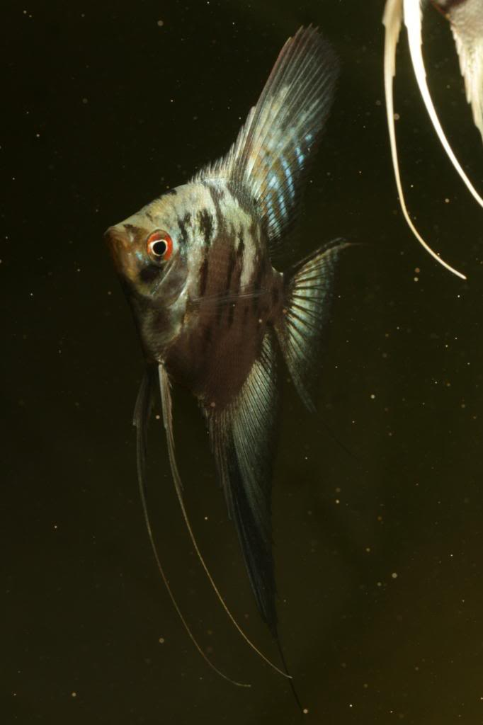 Robs fish room tales. - Page 3 Eaf698da-1818-450e-b17c-c07b85c95922_zpsd14683e4