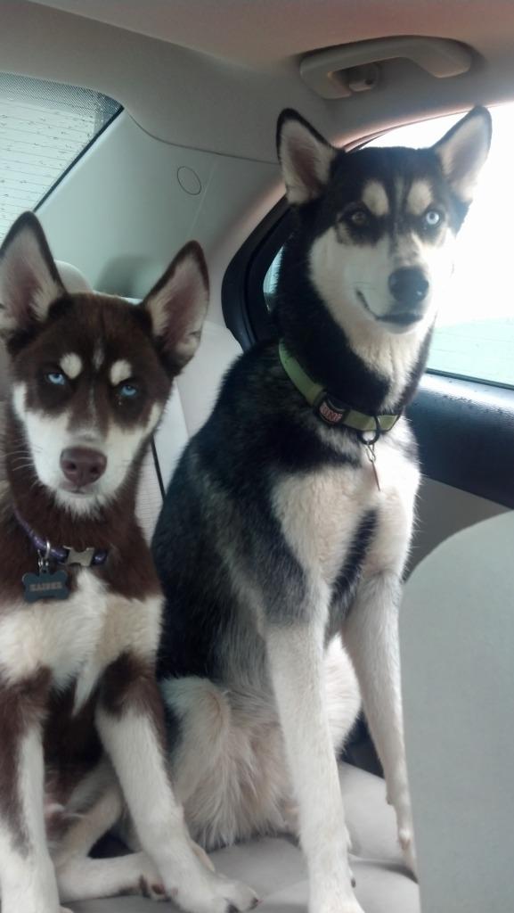 Classic Photos Of Your Huskies 2012-08-18_12-53-44_591